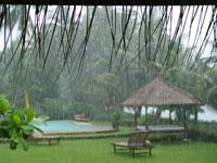 Gaia im Regen